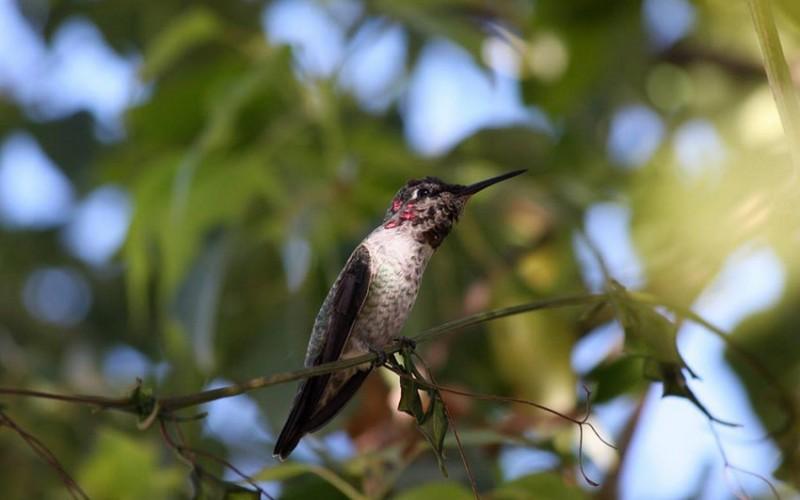 Erwachen der Vogelwelt auf dem Singer Berg
