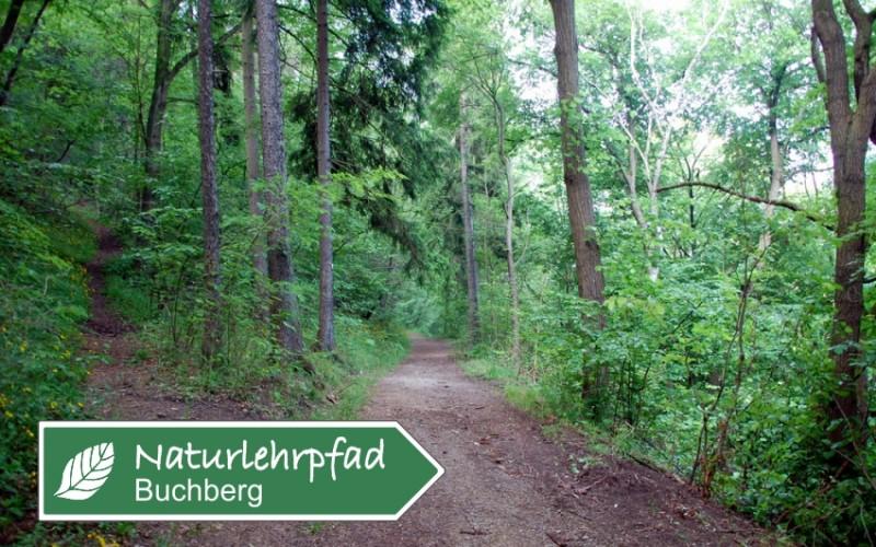 Naturlehrpfad Buchberg