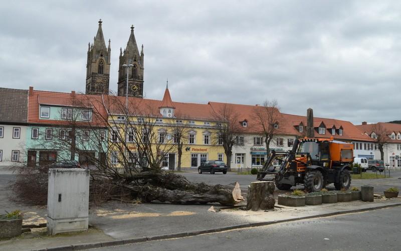 Letzte Linden fallen für Neugestaltung des Marktes