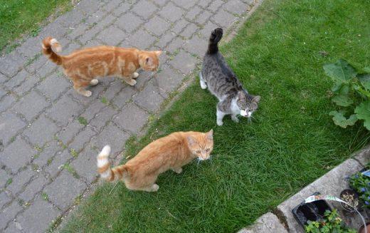Aktuelle Katzenproblematik in der Salinestraße