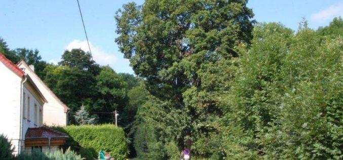 Baumfällung an der Vogelstange