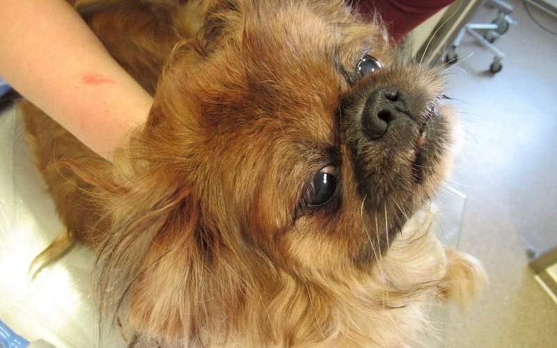 Tierquälerei – ausgesetzter Hund am Haunberg/ Silberberg