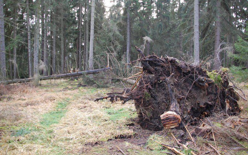 """""""Friederike"""" hat auch im Stadtwald ihr Unwesen getrieben"""